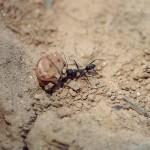 Hartes Ameisenleben