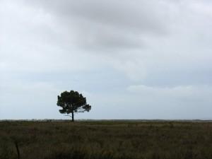 Und dahinter der Atlantik ... - Auf dem Weg zum Praia da Amoreira
