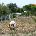 Porca - Auf dem Weg zum Praia da Amoreira