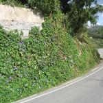 Oktoberblüte - auf dem Weg von Casais nach Monchique