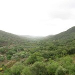 Sao Bras de Alportel - Bauernpfade (1)