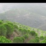 """Die """"grüne Hölle"""" der Serra de Monchique"""